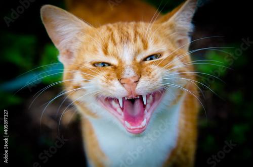 Fototapeta Close-up Portrait Of A Cat