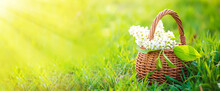 Still Life Of Bird Cherry In Basket Against Sky. Bouquet Flowers On Background Of Green Grass. Background For Greeting Card With Beginning Of Spring, March 8 Or Valentine's Day.