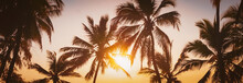 Sunset Over Silhouette Of Palm Trees