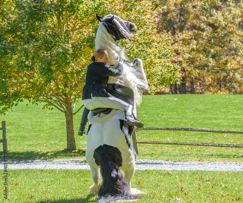 Gypsy Horse with rider rearing up vertical