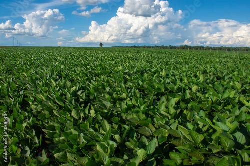 Valokuvatapetti soy plantation in the state of Mato Grosso do Sul, Brazil