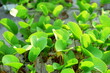 Leinwandbild Motiv Close-up Of Green Leaves On Plant
