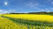 Leinwandbild Motiv Scenic View Of Oilseed Rape Field Against Sky