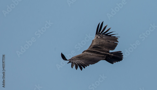 Fototapeta premium Low Angle View Of Eagle Flying In Sky