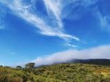 Fototapeta Tęcza - Low Angle View Of Trees Against Blue Sky