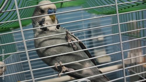 Fototapeta premium Monkey In Cage