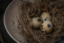 Three Quail Eggs In A Nest In A Bowl Landscape