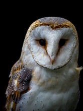 Vertical Shot Of A Barn Owl Isolated On A Black Background