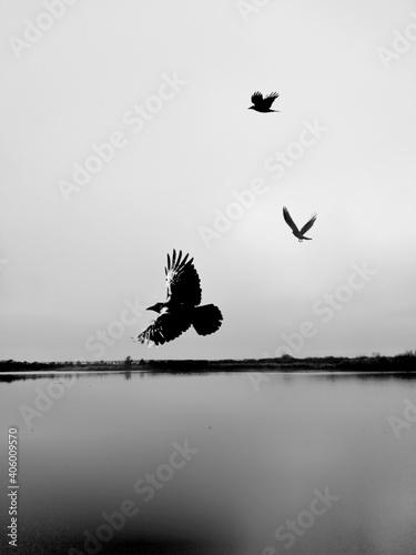 Fototapeta premium Silhouette Birds Flying Over Lake Against Sky