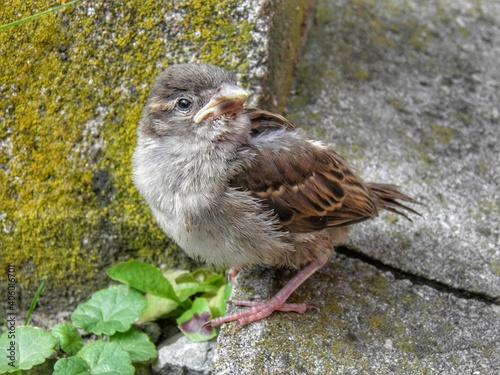 Fototapeta premium Close-up Of Bird