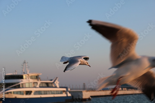 Fototapeta premium Low Angle View Of Seagulls Flying Against The Sky