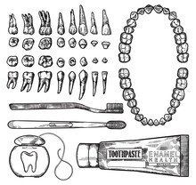 Hand Drawing Lineart Engraving Dental Cleaning Tools And Teeth Illustration Set