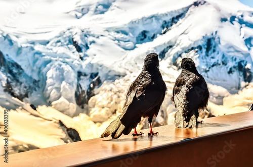 Fototapeta premium View Of Birds Perching On Snowcapped Mountain