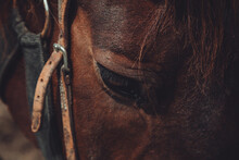 Closeup Shot Of A Beautiful Domestic Brown Sad Horse Face Details