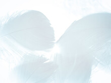 Beautiful Abstract Blue Feathers On White Background, Black Feather Texture On Blue Pattern And Blue Background, Feather Wallpaper, Blue Banners, Love Theme, Valentines Day, Dark Texture