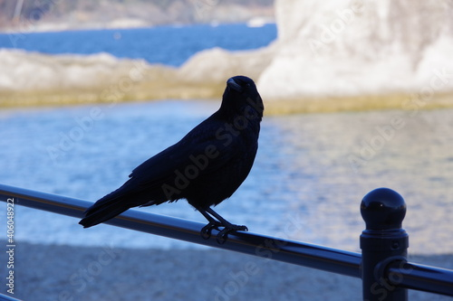 Fototapeta premium Close-up Of Bird Perching On Railing