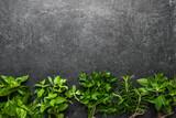 Fototapeta Tulipany - Fresh garden herbs collection on dark slate
