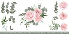 Compositions Of Pink Roses, Green Plants And Leaves, Eucalyptus. All Elements Are Isolated On A White Background.