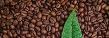 Green Leaf On A Dark Roasted Coffee Beans Filled Background.