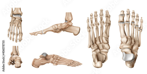 Obraz Foot Bones Anatomy Set - fototapety do salonu