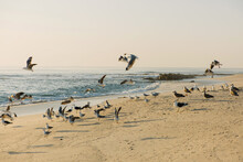 Seagulls On The Beach At Sunset Taking Flight And Flying