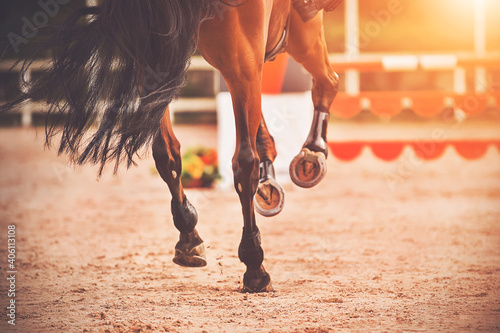 Fototapeta The shod hooves of a galloping bay horse step on the sand of an outdoor arena at equestrian competitions