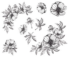 Beautiful Flowers, Anemones On A White Background. Ready-made Compositions And Individual Elements.