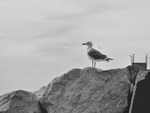 Seagull Perching On Rock Against Sky