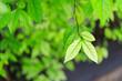 Leinwandbild Motiv Close-up Of Leaves Against Blurred Background
