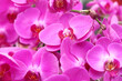 Leinwandbild Motiv Orchild Flower