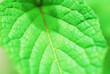 Leinwandbild Motiv Full Frame Shot Of Green Leaves