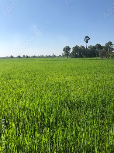 Obraz Scenic View Of Agricultural Field Against Sky - fototapety do salonu
