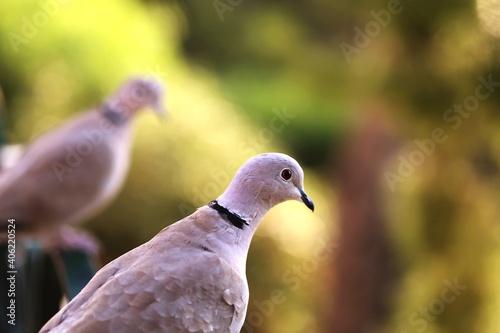 Fototapeta premium Close-up Of Pigeon Perching