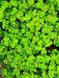 Leinwandbild Motiv Full Frame Shot Of Fresh Green Leaves