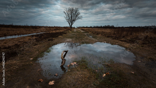 Fotografie, Obraz Reflection Of Tree In Puddle On Field