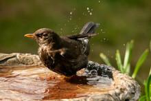 Close-up Of Bird Perching On A Bird Bath