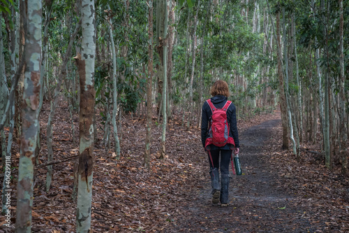 Obraz na plátne bushwalking in the forest