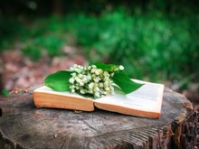 Lilies Of The Valley And An Open Book On A Tree Log