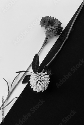 Fotografie, Obraz Close-up Of Wilted Flower Against White Background