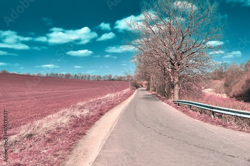 Empty Road By Trees Against Sky Wallpaper Mural