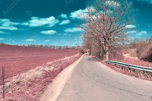 Papel de parede Empty Road By Trees Against Sky