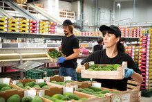 Female Warehouse Worker Carrying Box With Fresh Avocado Fruits On Packing Facility