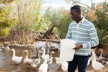 Positive African American Male Farmer Working At Farm, Feeding Geese