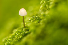 Mini Seta En Fondo Verde