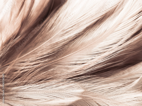 Beautiful abstract white and brown feathers on white background and soft yellow Fototapet