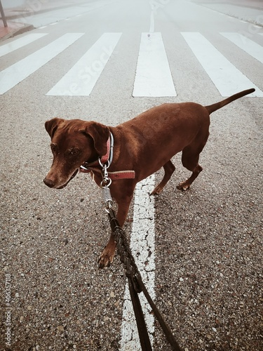 Dog Standing On Road In City Fotobehang