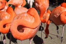 Orange Flamingoes Resting Outdoors