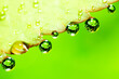 Leinwandbild Motiv Close-up Of Water Drops On Leaf