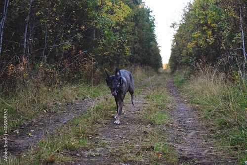 Foto Portrait Of Dog Walking On Footpath By Plants