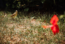 A Bird Looking At A Red Butterfly Sitti